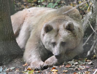 Emma aus dem alternativen Bärenpark Worbis