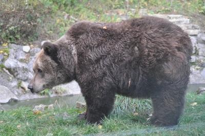 Laura aus dem alternativen Bärenpark Worbis
